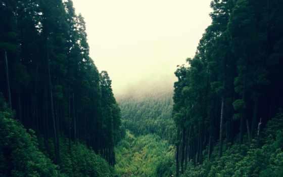 лес, густой, trees, зелёный, природа, река, бамбук,