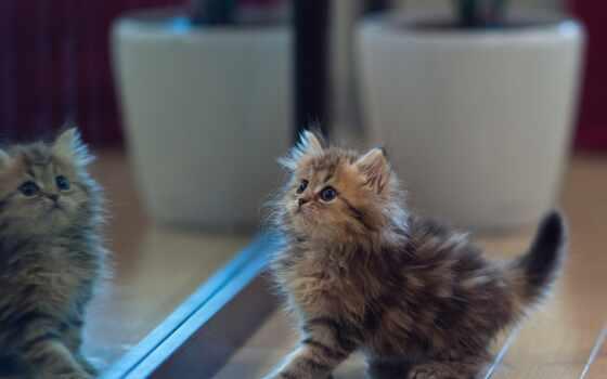котоматрица, animal, кот, minute, mine, зеркало, new, птица, hour, toride