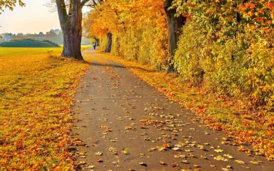 осень, природа, настроение, балла, добавил, дороги,
