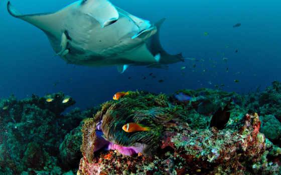 world, природы, скаты, underwater, фотографии,
