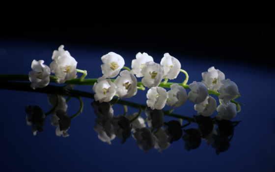 цветы, красивые, весна