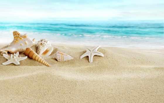 море, пляж, seashells