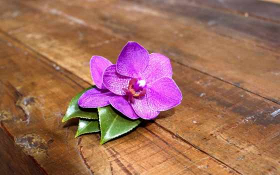 орхидея, цветы, доски