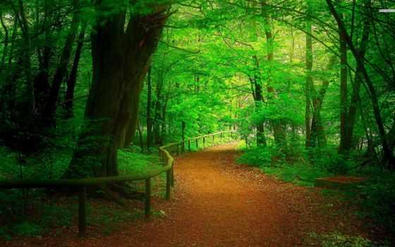 desktop, natureza, parede, plano, free, лес, fundo, papel,