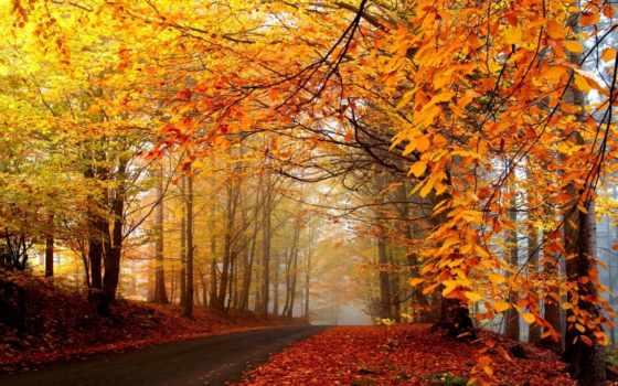осень, природа, золотая, года, time, картинка,