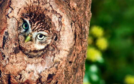 сова, дерево, ложбинка, птиц,