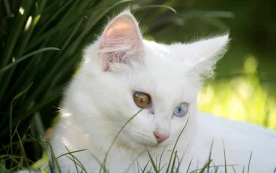 котенок, белая, кот, разные, свет, art, спит, рисунок, морда,