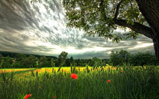 природа, поле, колоски, небо, красивые, страница, широкоформатные, маки,