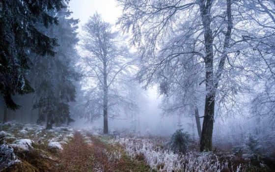 winter, пасть, фон, desktop, осень, природа, images,