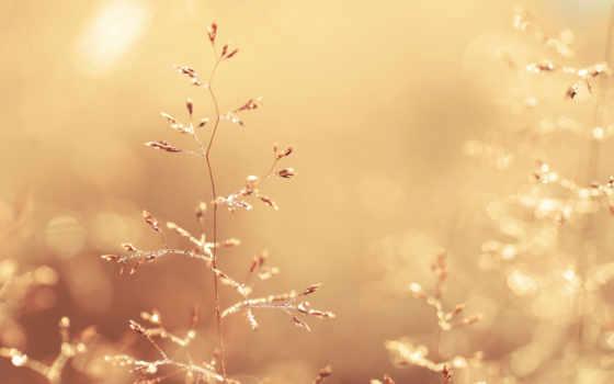 макро, картинка, свет, золотистый, трава, растения, природа, капли, color, роса, блики,
