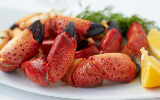photos, pictures, sample, crab, premium,