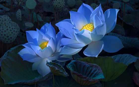 цветы Кувшинки, Цветы Лотоса, Цветки Лотоса, Весенние Цветы, Сады,