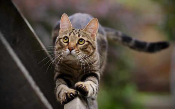 кот, кошки, коты
