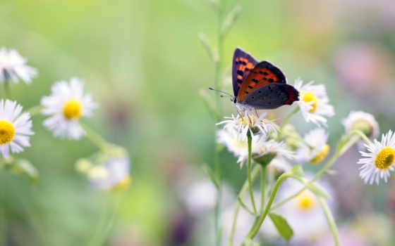 бабочка, цветы, графика