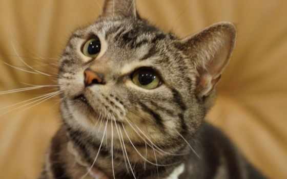милый серый кот