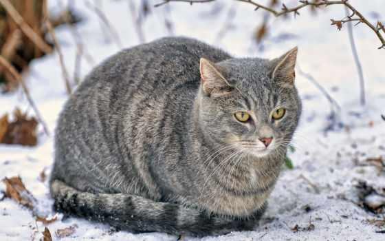 кот, снег, дек