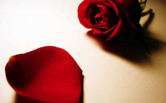 mawar, hitam, ди, yang, ini, entah, янв, bagikan,