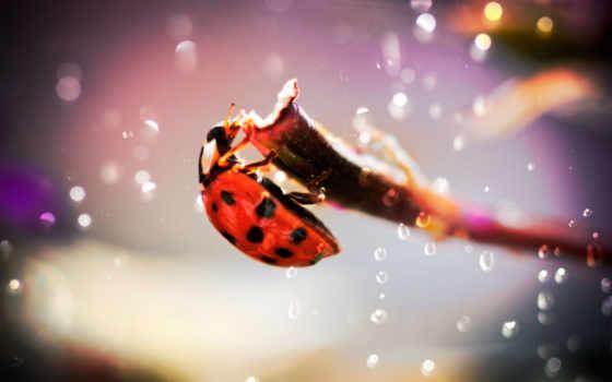 капли, божья, коровка, насекомое, телефон, роса, листва, жук, branch, water, брызги,