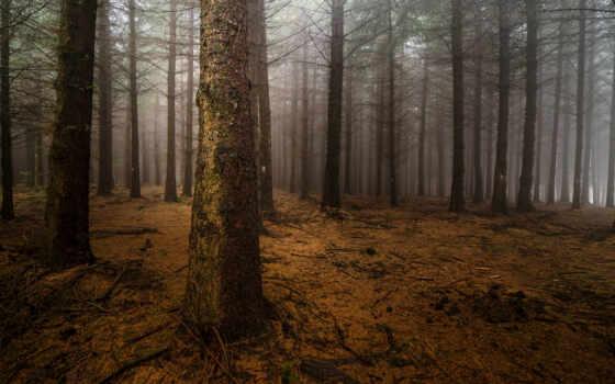 лес, сосны