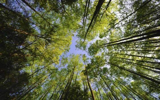 деревья, небо, дерево