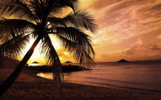 пляж, закате, закат, запросу, пальмы, результатов, море, sunsets,