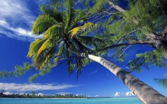 summer, природа, вечное, большие, leto, красивые,