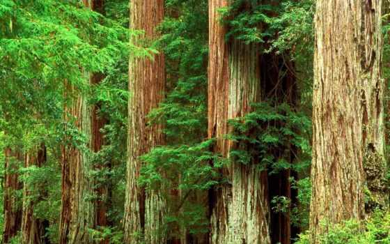 лес, красивые, часть, целикомв, свой, community, цитатник, прочитать, информация,