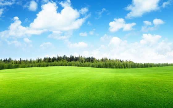 трава, небо, поле