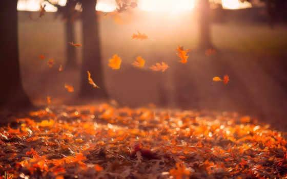 осень, листопад, sun, разделе, studios, джейк, trees, olson,