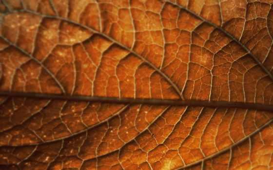 лист, осень, leaf, фоны, прожилки, браун, дружелюбный,
