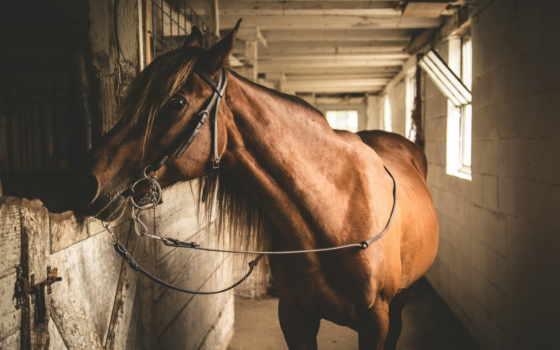 лошади, животные, página
