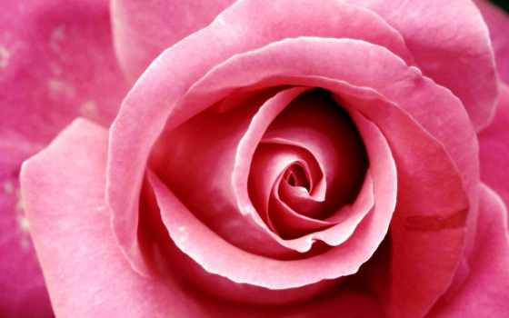 роза, алмазная, вышивка