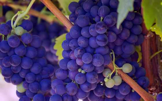 плоды, purple, виноград, are, health, еда,