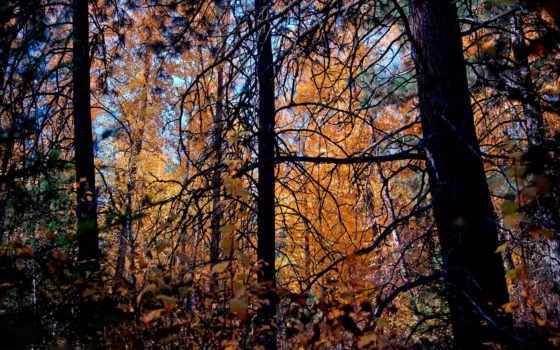 categoria, лес, листва, uhren, животных, online,