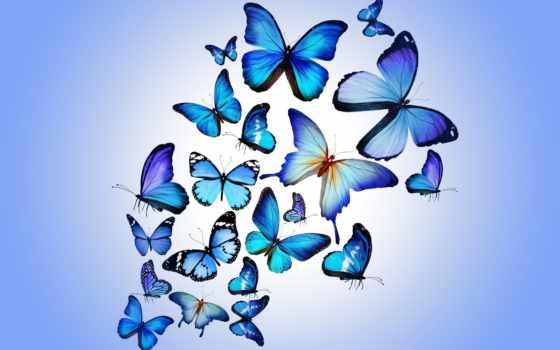 parede, papel, borboletas, azul, borboleta, pinterest, papéis, colorido, para, idéias, бабочки
