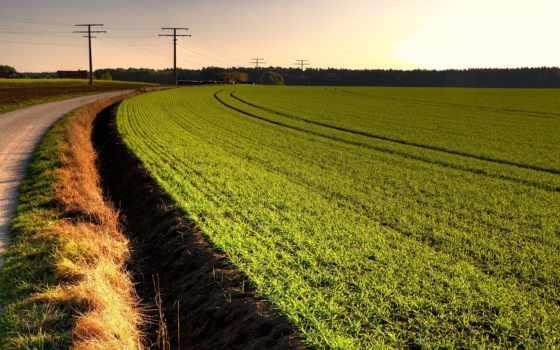 дорога, поле, margin, among, сквозь, идущая, зеленое, золотое, дороги,