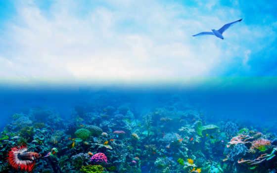 палуба, water, под, ocean, underwater, removed, море, побережье, остров, notice
