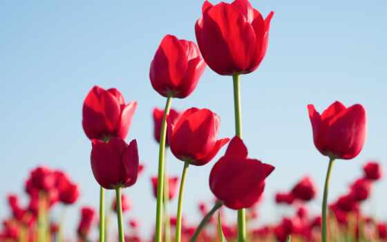 zhanaiyi, плакат, print, цветы, тюльпан, free, amazon