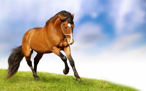 фотообои, лошадь, animal, catalog