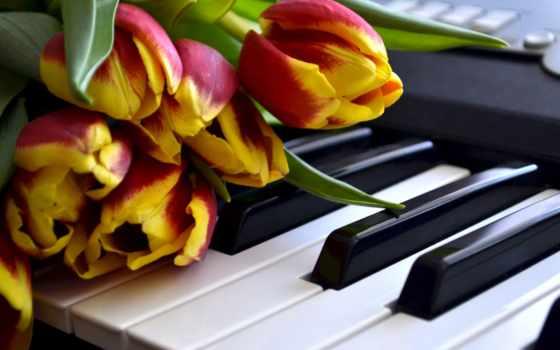 цветы, клавиши, тюльпаны