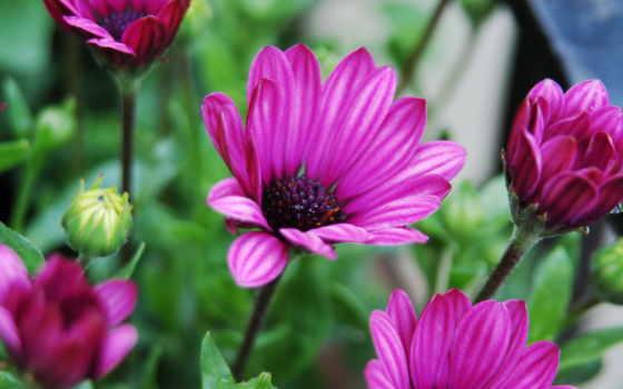 цветы, arnusha, прочитать
