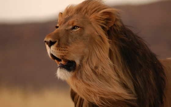 one, life, lion, печь, проекта,