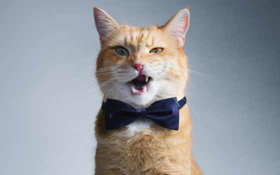 кот, боб, улица, named, watch, drama,