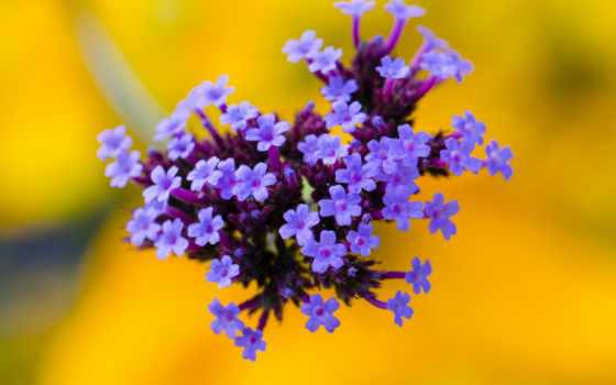 cvety, flowers, yellow, цветы, природа, blue, desktop, картинка,