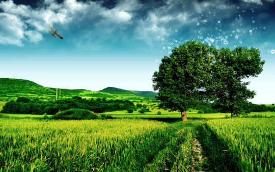 full, трава, природа, дорога, дороги, страница,