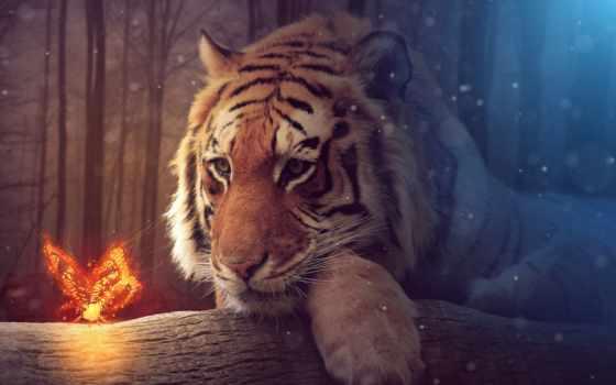 art, взгляд, заставки, тигр, тигра, тигры, волк, девушка, фантасмагория, zhivotnye, сюрреализм,