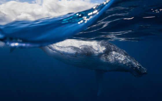 кит, вода,