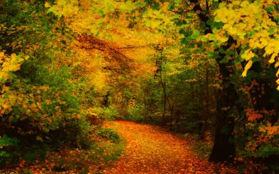 осень, желтые, листья