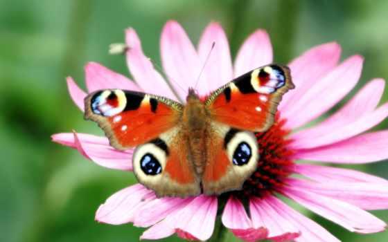 цветы, android, бабочка