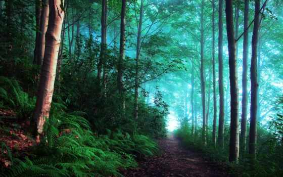лесу, утро, великобритания, туманное, лес, туманном, тропинка,